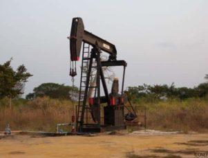 congo oil